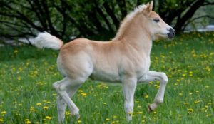 Germany: Muslim refugee arrested for raping pony at childrens zoo