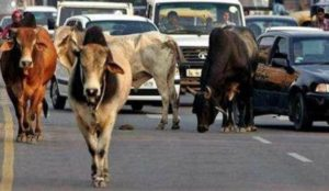 India: Muslim mob attacks police with stones and bombs for opposing cow slaughter