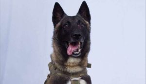 """Trump releases photo of """"the wonderful dog that did such a GREAT JOB in capturing and killing the Leader of ISIS"""""""